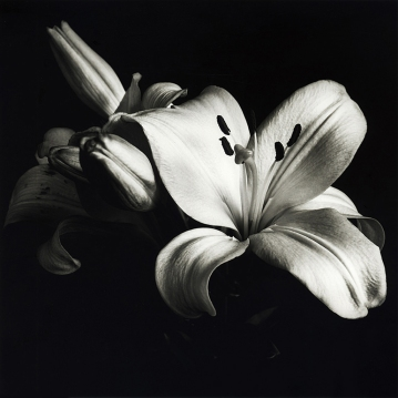 1 Lily_Peter Fallas