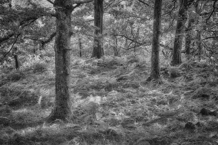 A Woodland in Cumbria