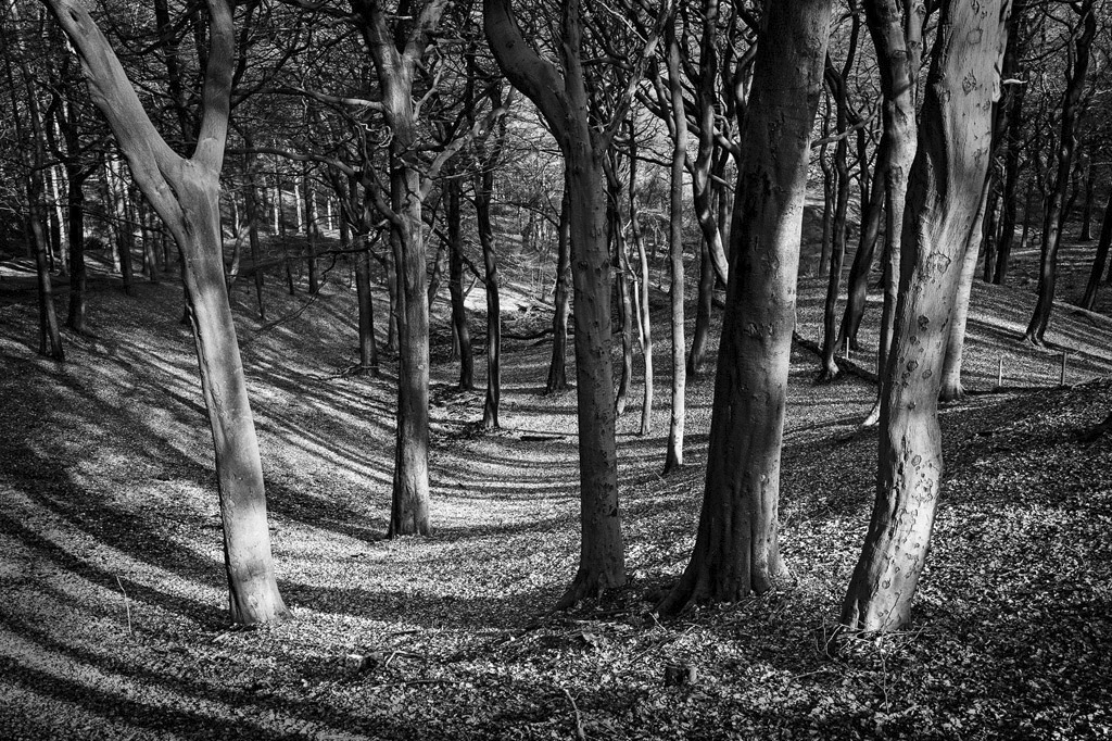 Tandle Hill Beeches
