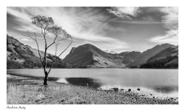 7 Buttermere & Tree_Andrew Auty 036