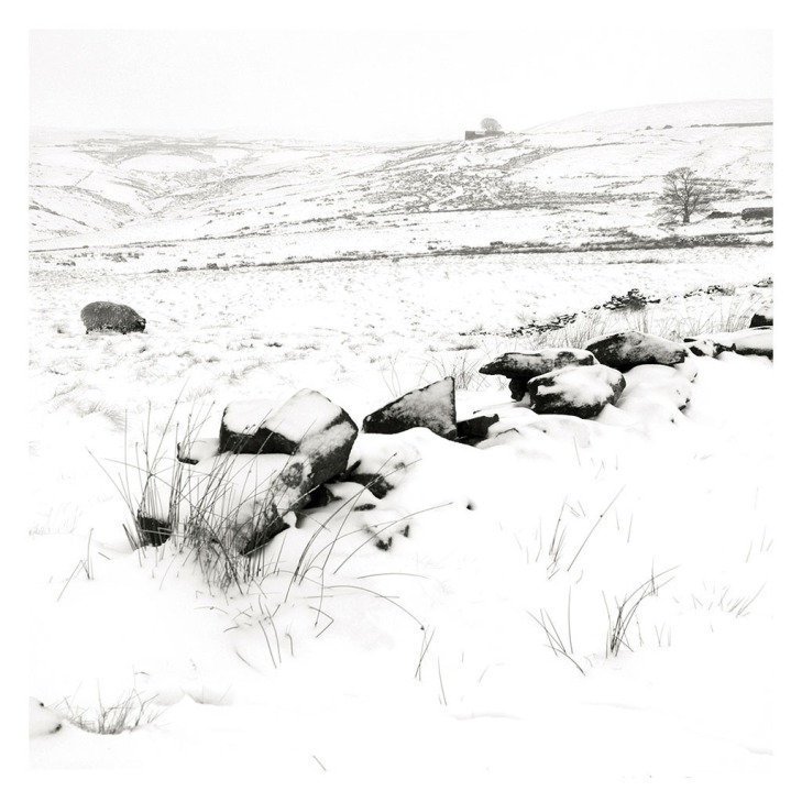 Top Withins in the Snow