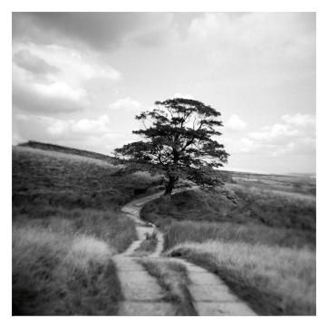 Tree on Haworth Moor, August